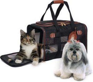 Viajar con nuestras mascotas