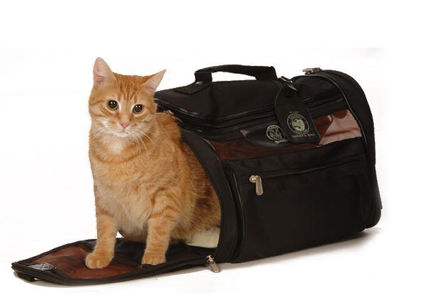 viajar-con-nuestras-mascotas5