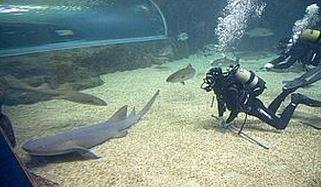 nadando-con-tiburones