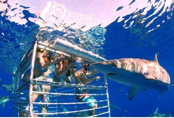nadar-entre-tiburones2