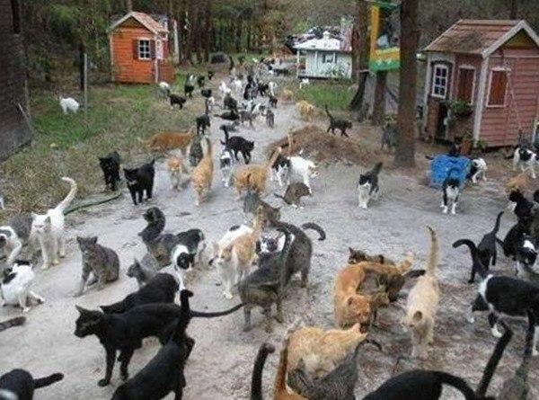 isla-de-los-gatos_thumb.jpg