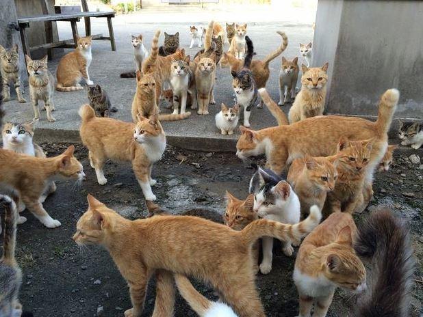 isla-gatos.jpg