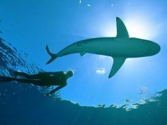 Nadar entre tiburones