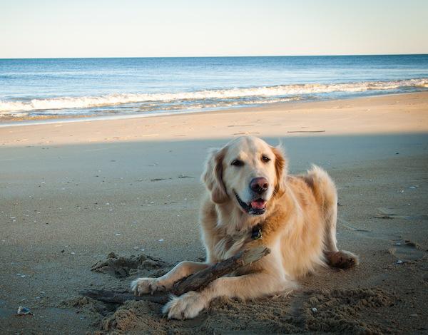 playas-para-perros-en-españa-perro-tumbado