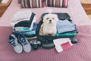 Vacaciones perros