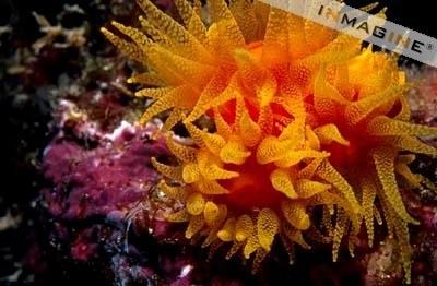 corales-1.jpg