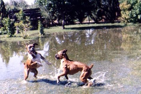 hoteles-perros-boxer.jpg