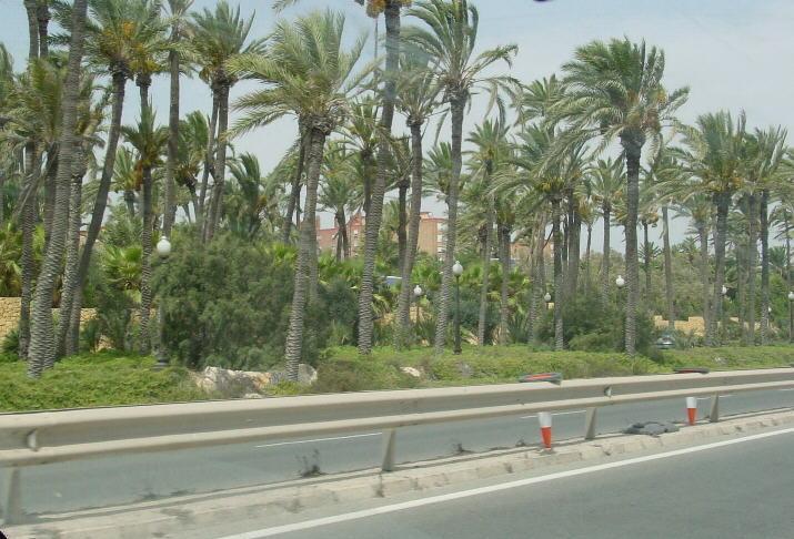 palmeral1.jpg