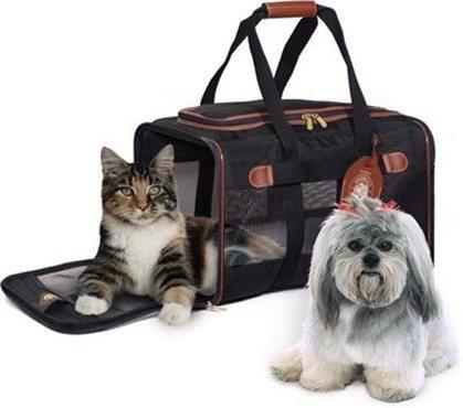 Qué debemos saber, para viajar con nuestras mascotas