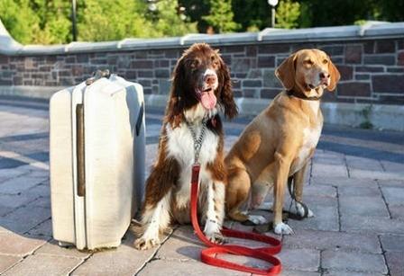 Qué debemos saber para viajar con nuestras mascotas
