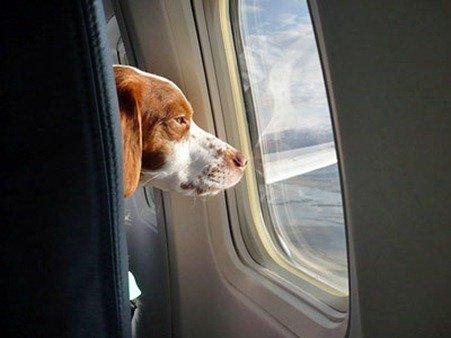 viajar con nuestras mascotas en avion