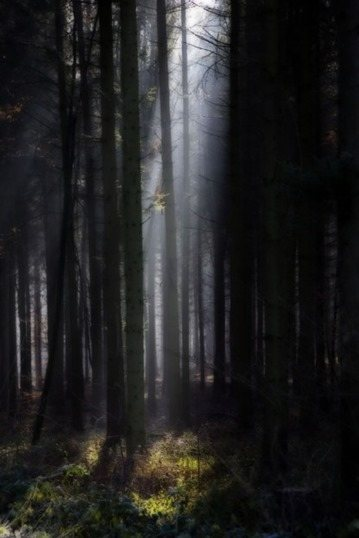 black-forest-beauty-11