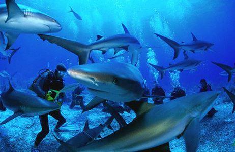 nadar-entre-tiburones3