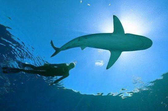 nadar-tiburones_thumb.jpg