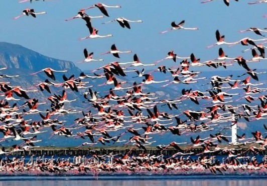 Parque-delta-del-ebro