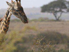 Kenia: un viaje al corazón de África