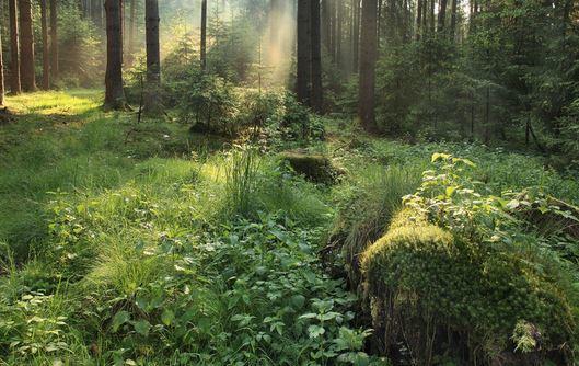 bosque-encantado