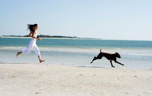 playas para perros 8